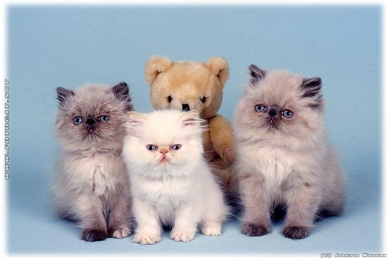 sugarpill kitten parade