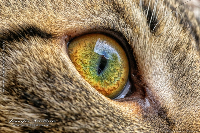 Macro foto of cat eye