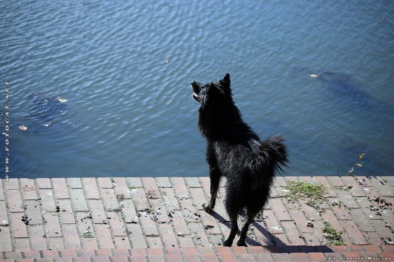 Unsere Hund Tikai